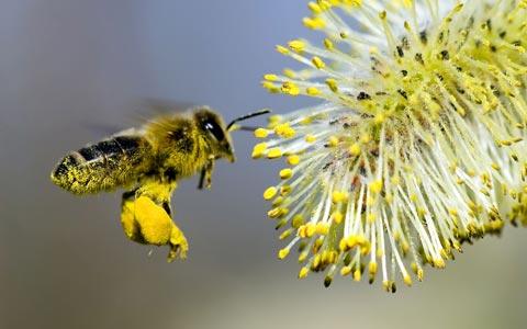Cách chữa bệnh ong đốt cực hiệu quả đảm bảo không buốt
